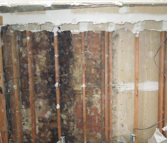Mold Grows Quickly