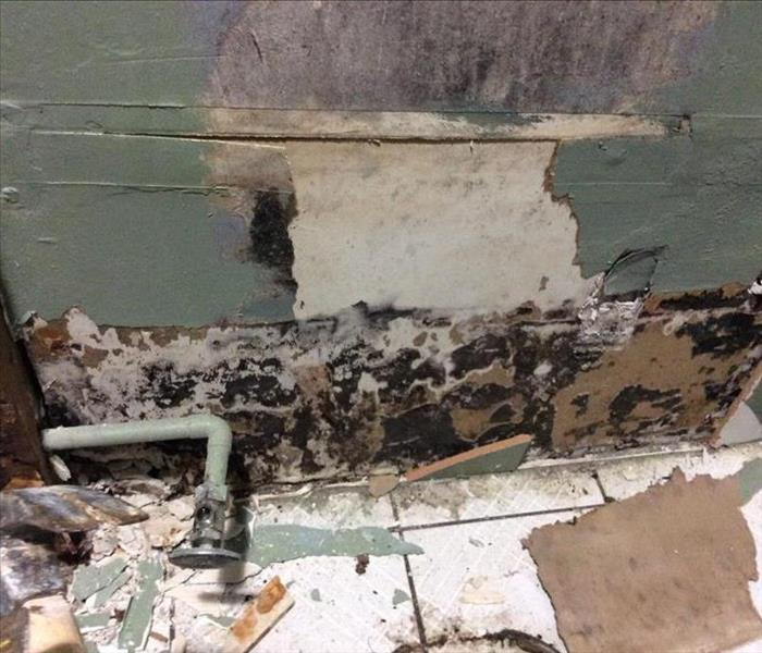 Mold Remediation When You Should Call for Professional Services to Clean Up Mold