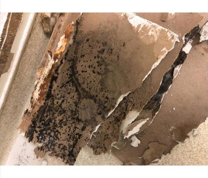 Mold Remediation Things Remember to Keep Mold at Bay
