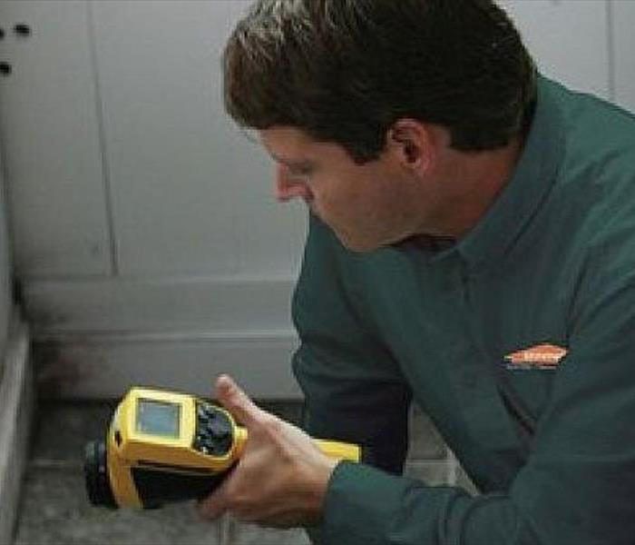 Mold Remediation Monmouth County: Do You Have Mold?