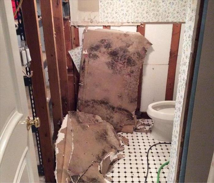 Mold Remediation Keep Your Home Safe From Mold
