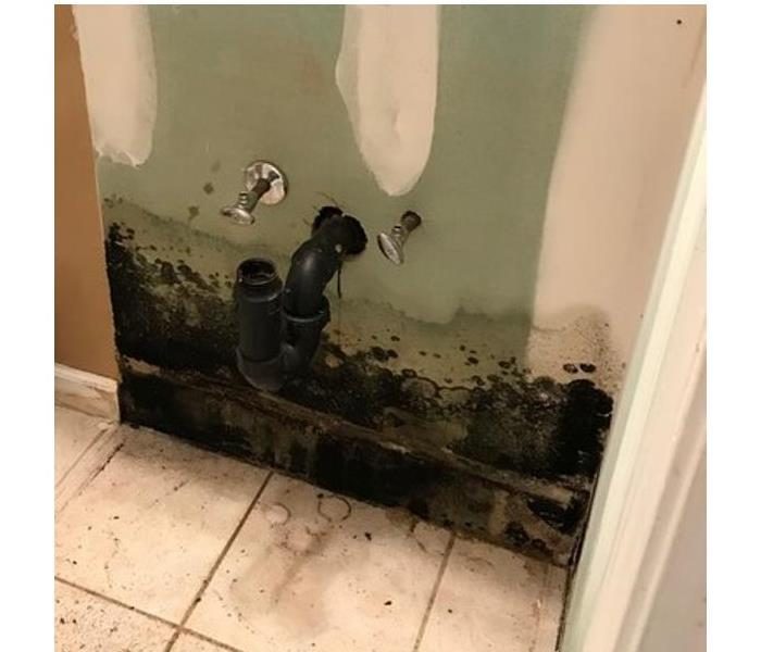 Mold Remediation Why Bleach Isn't an Effective Mold Remover