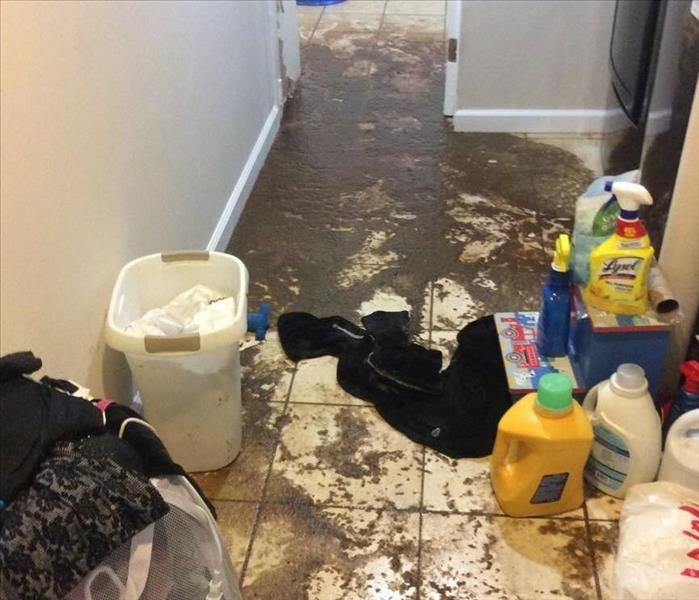 Water Damage What to Do When Sewage Backs Up in Your Home