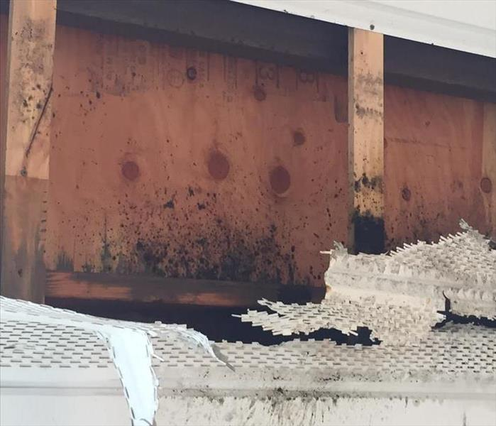 Mold Remediation A Wet Spring May Mean Mold Growth in your Home